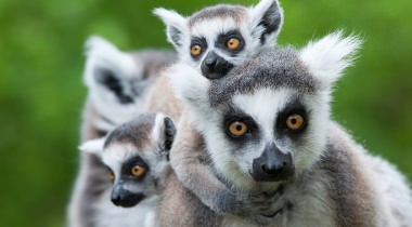 Madagaskar - Familiereis