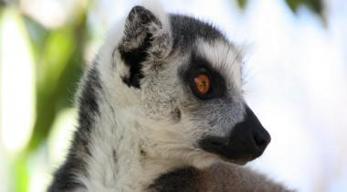 Natuurreis Madagaskar