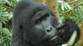Oeganda Rondreis Gorilla's & Game Parks