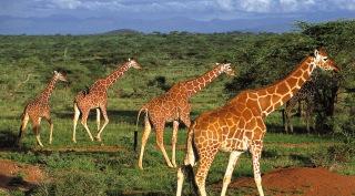 Safari en strand Kenia
