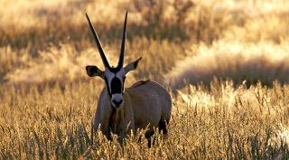 Camperreis windhoek