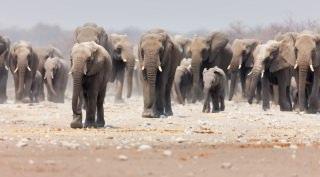 Camperreis Namibië met camperovernachting
