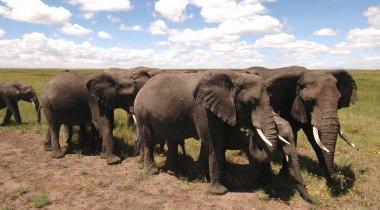 Camperreis beestenboel in Afrika