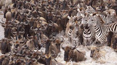 Migratie Serengeti