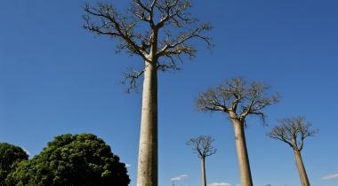 Rondreis Madagaskar