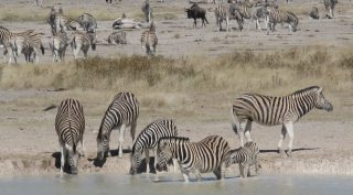 16-daagse rondreis Namibië