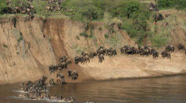 Kenia - 8 daagse privé safari rondreis