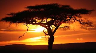 Kenia - 14 daagse privé safari & strandvakantie