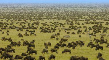 Tanzania - 8 daagse privé safari rondreis