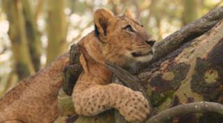 Kenia - 7 daagse privé safari rondreis