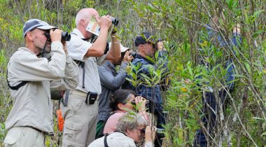 21-daagse vogelsafari langs hotels