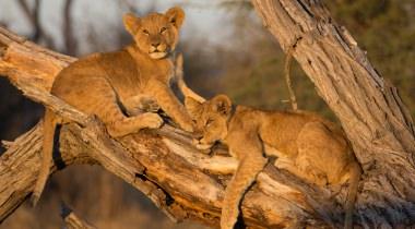 Unieke familiesafari door Botswana