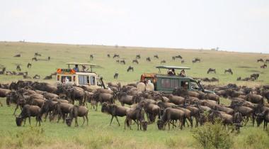 Migratie safari Kenia & strand