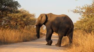 Rondreis Krugerpark, Zulu en Drakensbergen