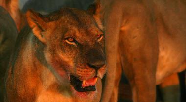 Betaalbare prive kampeersafari Botswana