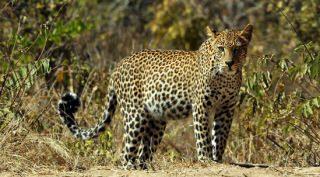 9-daagse groeps lodge safari Zuid-Tanzania