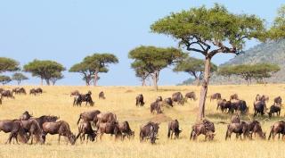 Zuid-Afrika - safari rondreis