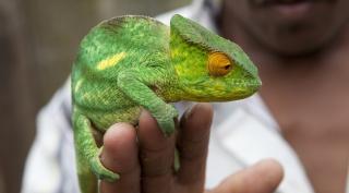 Madagaskar - budgetreis