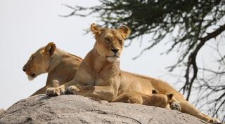 Ontdek het prachtige Tanzania - safari en strand
