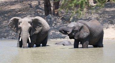 Lion King safari Tanzania & Zanzibar