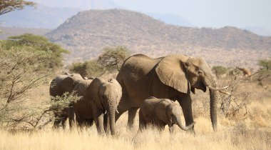 BIG FIVE prive safari & strand (15 dagen)