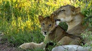 Maatwerk safari Tanzania 7-daags