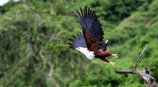 Maatwerk safari Oeganda 15-daags