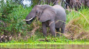 Zuid Tanzania - Safari op Maat