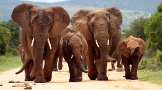 Zuid Afrika - Autorondreis op Maat