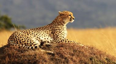 Kenia - Safari op maat