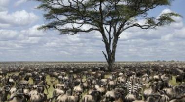 8 daagse tanzania safari, zeer geschikt voor de grote trek