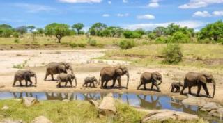 9 daagse safari vakantie Tanzania