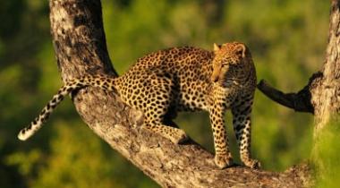 10 daagse rondreis Tanzania, alle noordelijke parken in 1 reis!