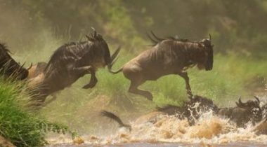 18 daagse Tanzania safari + Zanzibar vakantie [grote trek]