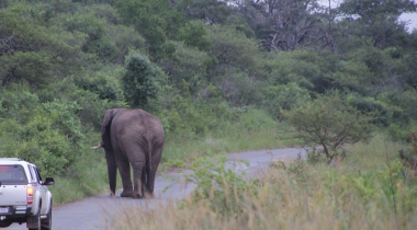 Self drive safari door mooiste wildparken van Zuid Afrika