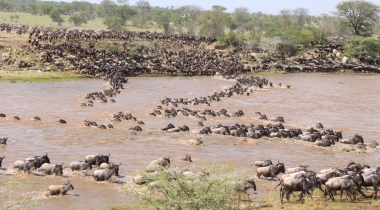 12 dagen Kampeersafari Grote Trek Tanzania