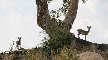 9 dagen Tented Lodge Safari Tanzania Hoogtepunten