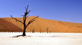 20 dagen per eigen 4WD door Namibië