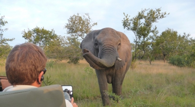 Zuid-Afrika puur safari