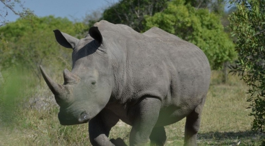vergelijk zuid afrika safari\u0027s van alle reisorganisaties safarisafari en strand reis