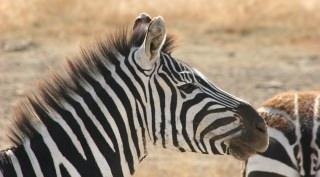 16-daagse rondreis Wild Zuid-Afrika met Lufthansa