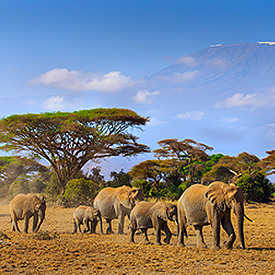 Kenia safari's