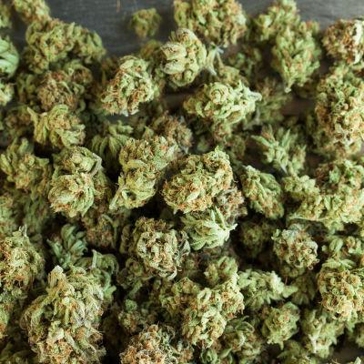 Weed2 xtjskl