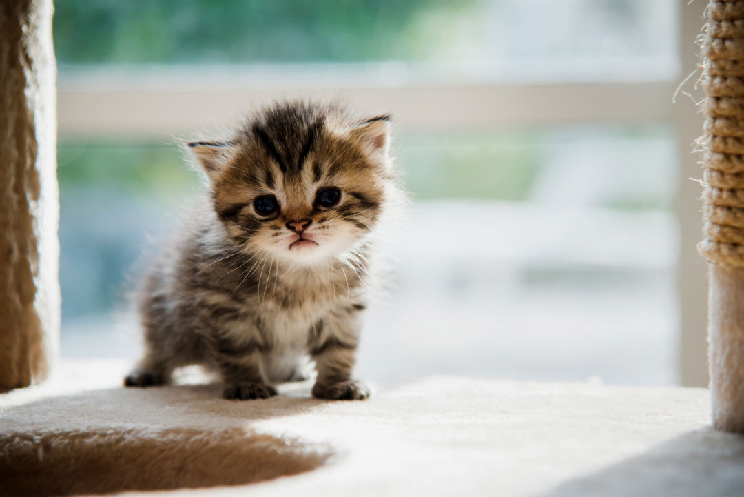 Jeff Merkley Wants To Make Kitten Murder Illegal