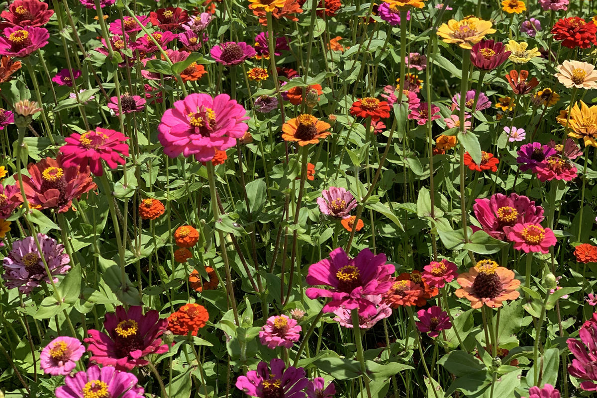 Pick Your Own Fresh Flowers and Produce at Hunsader Farms