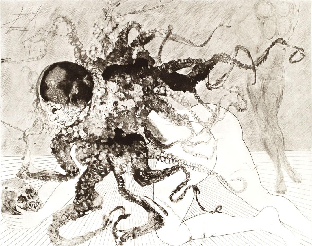 Medusa wygvxb