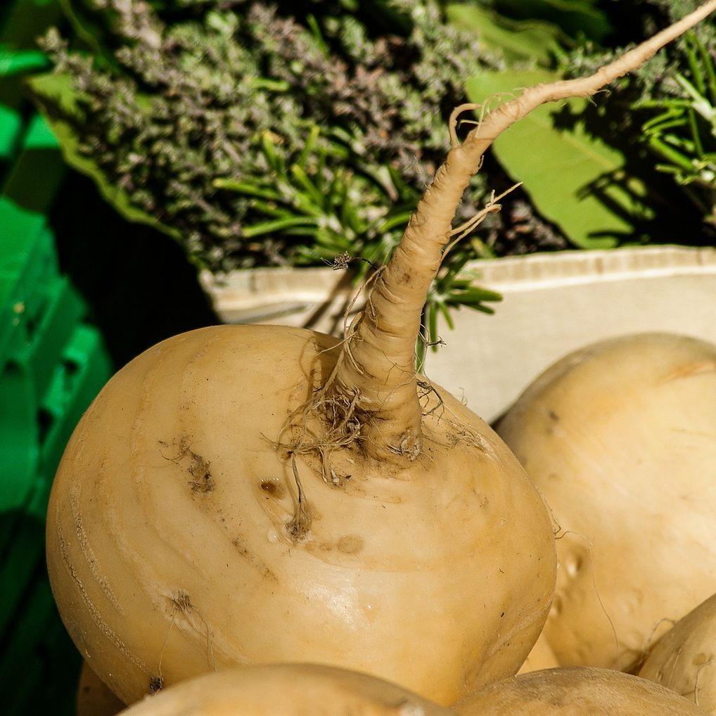 Turnips photo 2 from pixabay zvl1de