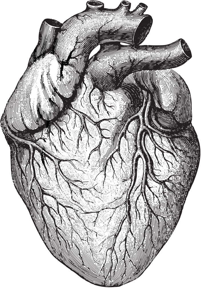Heart roiedh