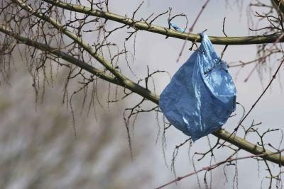 Plastic bags trees2 web qo1zkt