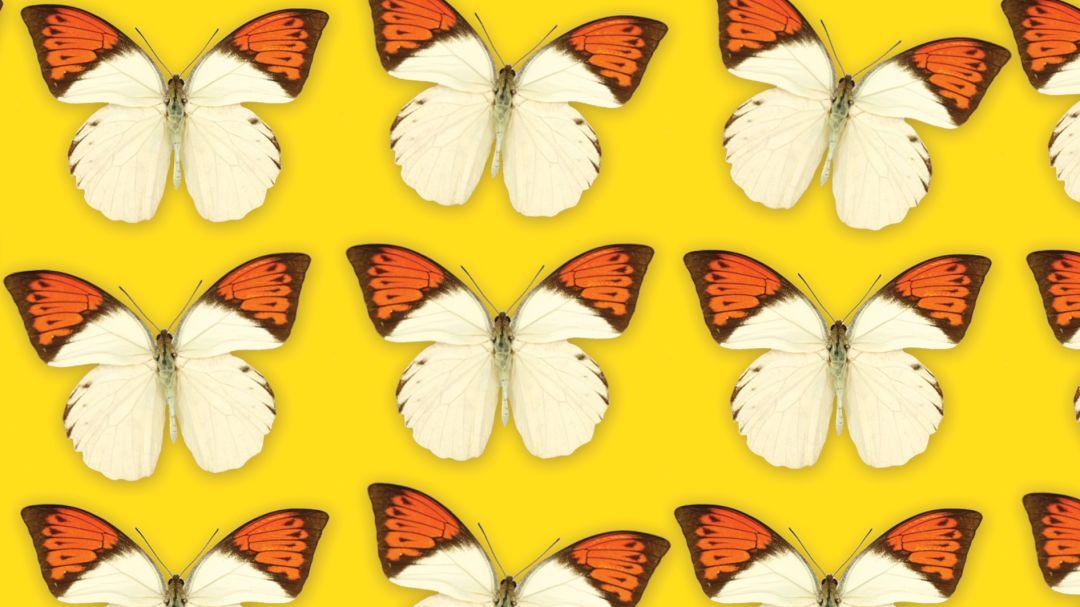 Butterflies 2 opdzyz